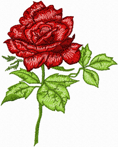 Rose patterns and designs